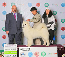 萨琳娜- (CH.CN) Caroline Of Mo Wang Jia Zu Kennel (FCI)