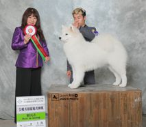 欧丽- CN.CH.Ouli Of Mo Wang Jia Zu Kennel (FCI)