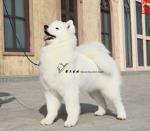 向上- (CH.CN)Pet Up of Mo Wang Jia Zu Kennel(FCI)