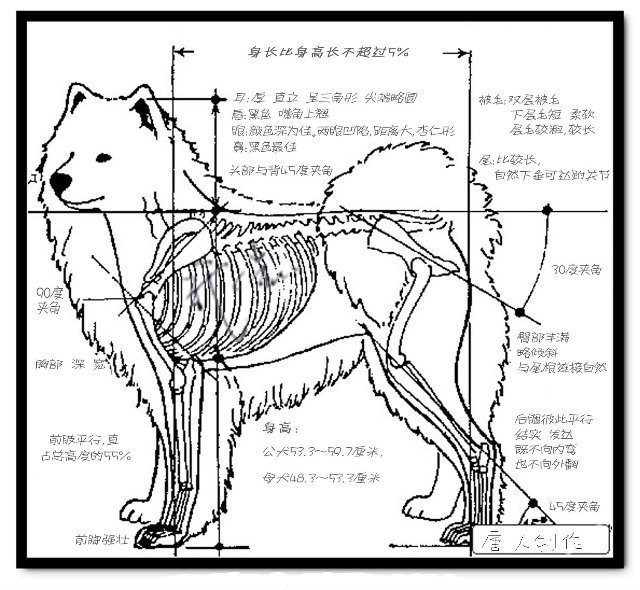 萨摩耶毛发的注意点   [3]纯种萨摩耶的毛发密集,初生毛浓密而且柔然,次生毛浓密且坚硬。   纯种萨摩耶的毛发容易脱落,大家要多注意给萨摩耶毛发保养。   纯种萨摩耶幼犬皮肤脆弱,所以小编希望大家爱护狗狗,尽量不要在潮湿的环境下饲养我们的萨摩耶幼犬。 生理指数   出生时14盎司-18盎司(0.